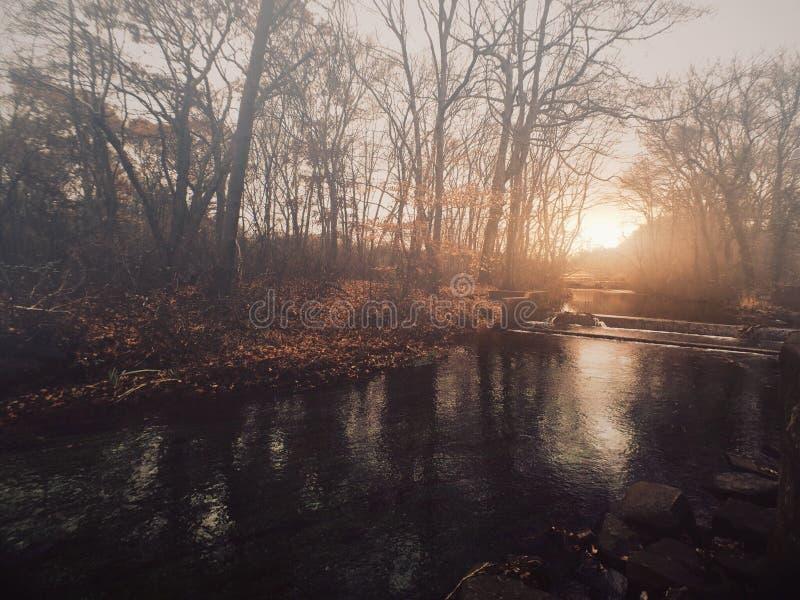 Floresta esmeralda imagens de stock royalty free