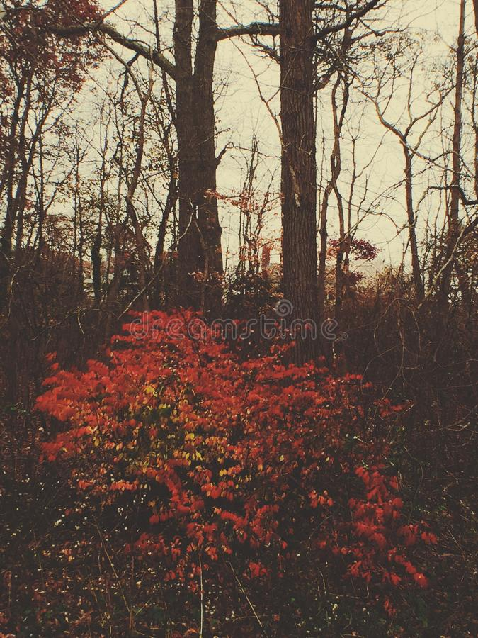 Floresta esmeralda foto de stock