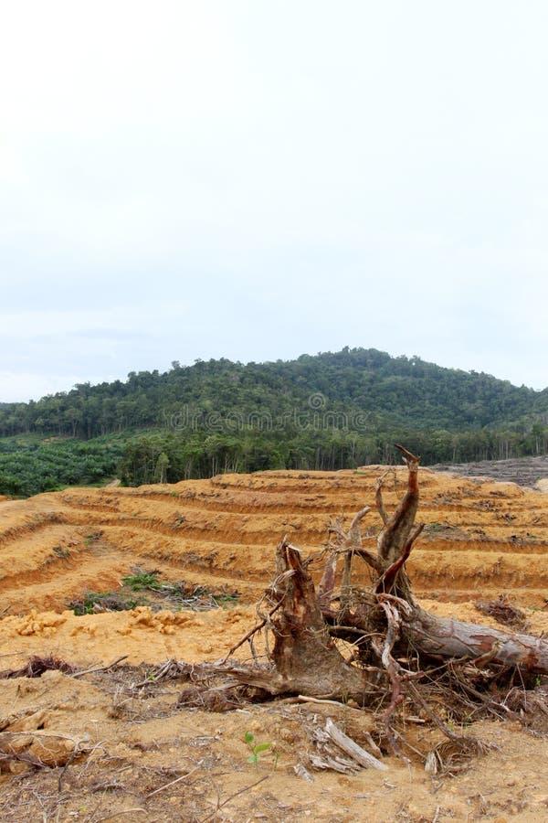 Floresta estéril foto de stock