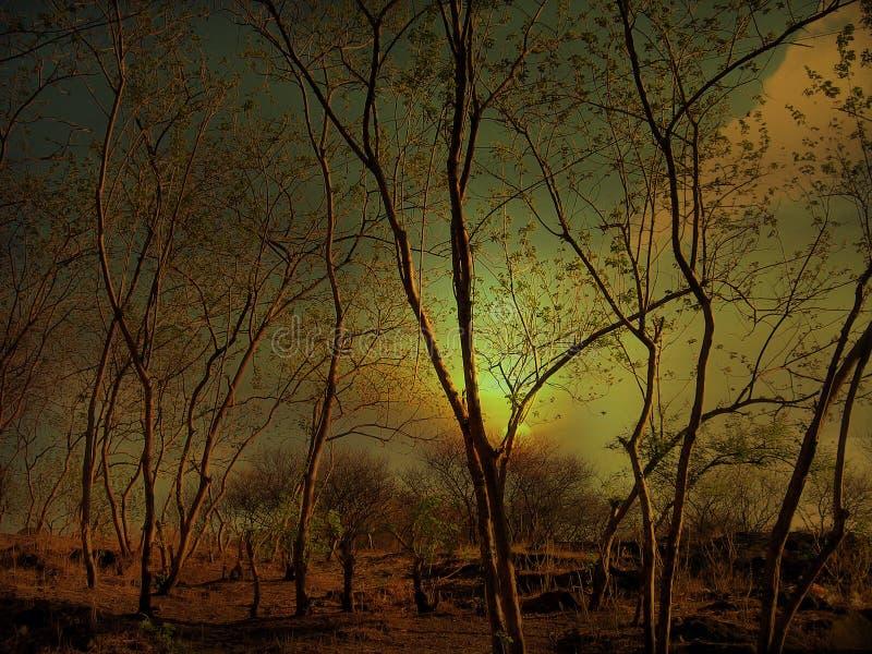 Floresta exótica imagens de stock royalty free