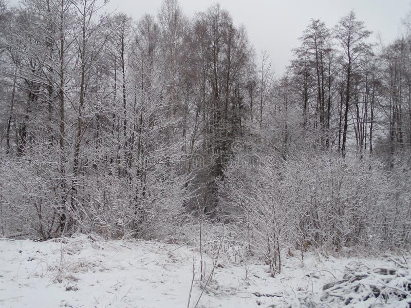 Floresta fabulosa do inverno fotos de stock