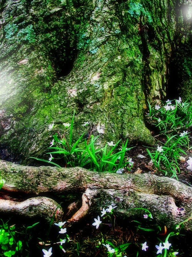 Floresta feericamente da fantasia fotos de stock