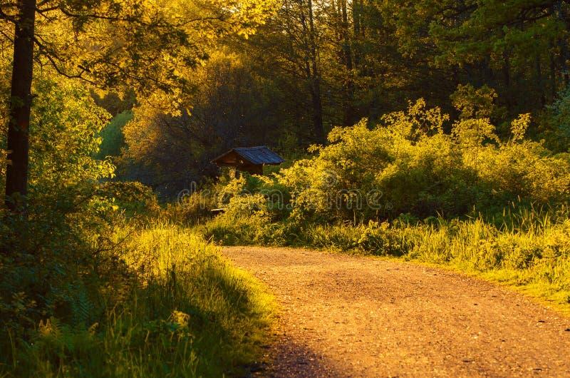 Floresta feericamente encantado fotografia de stock royalty free