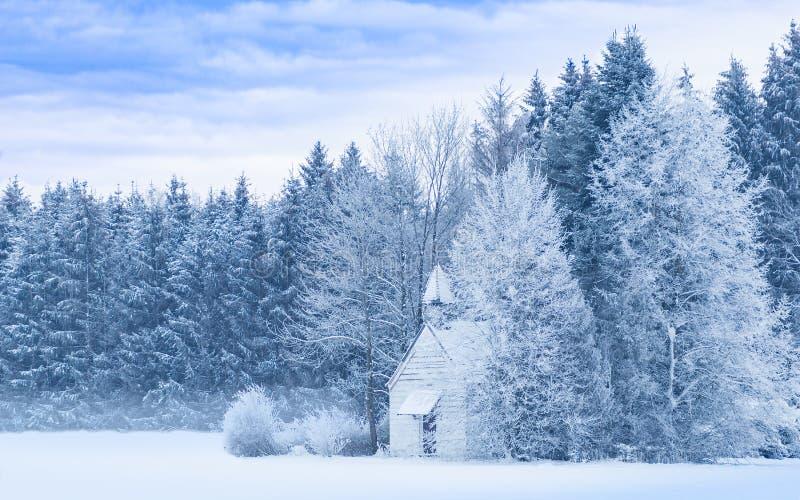 Floresta gelado nevado da paisagem panorâmico sereno idílico do inverno fotos de stock