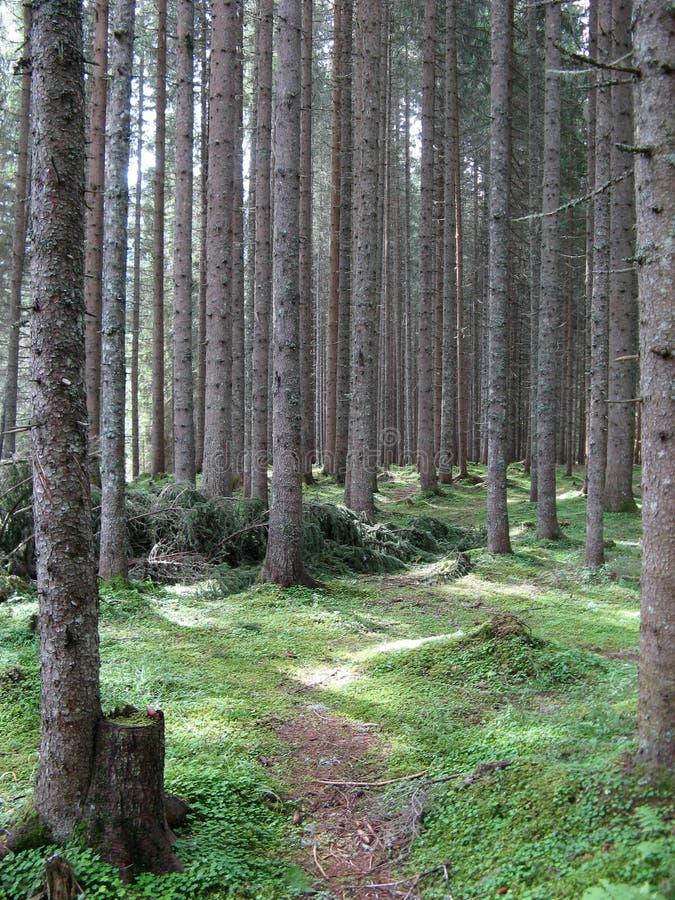 Floresta grossa fotos de stock