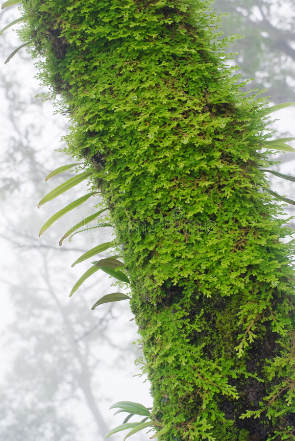 Floresta húmida imagem de stock