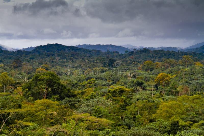Floresta húmida africana fotografia de stock royalty free