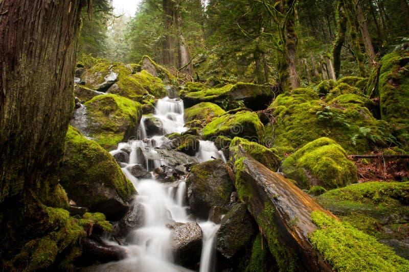 Floresta húmida canadense imagens de stock
