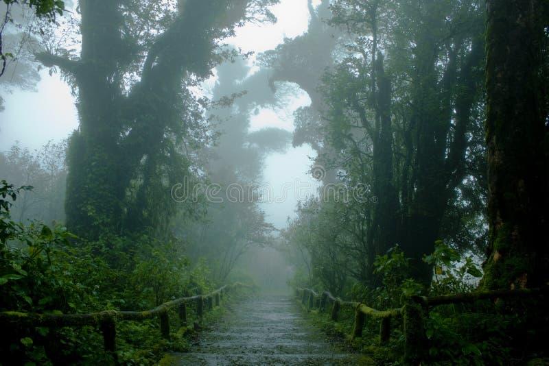 Floresta húmida com escadas fotografia de stock royalty free