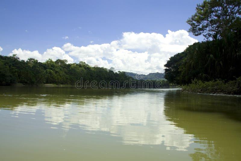 a floresta húmida de Amazon imagem de stock
