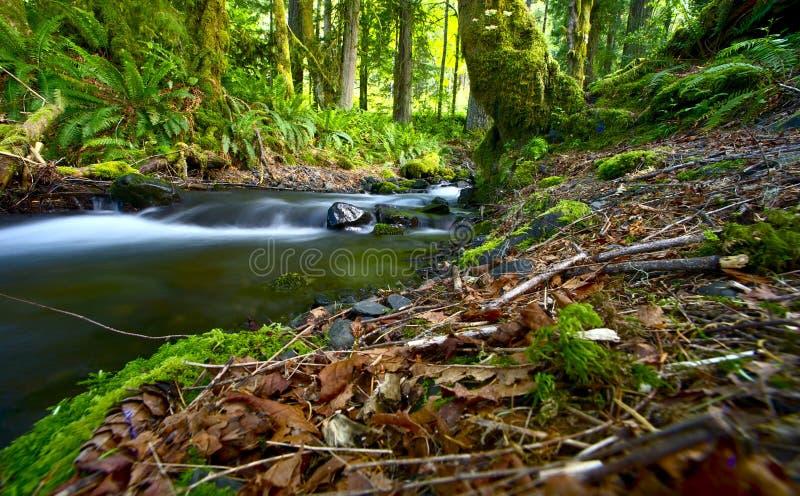 Floresta húmida de Washington imagem de stock