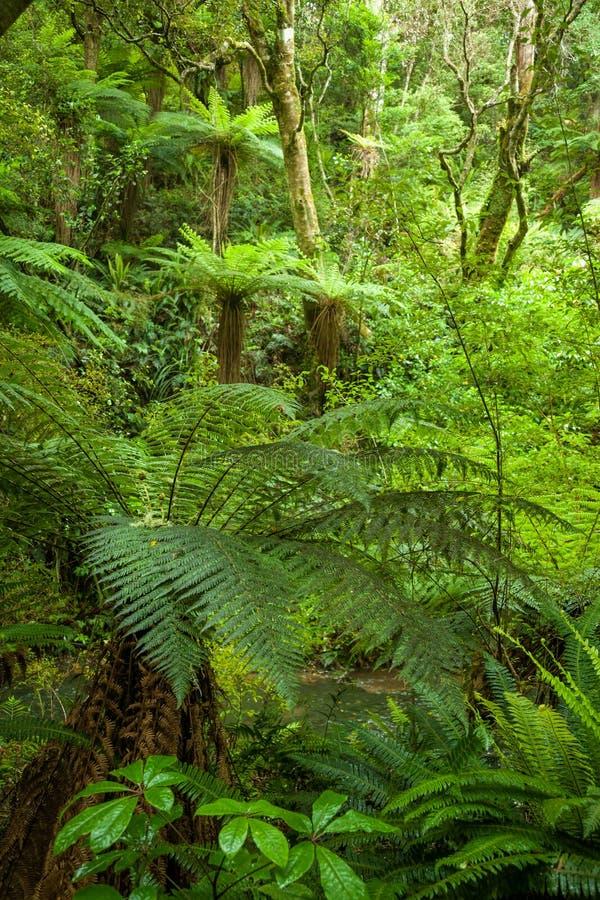 Floresta húmida densa imagem de stock royalty free