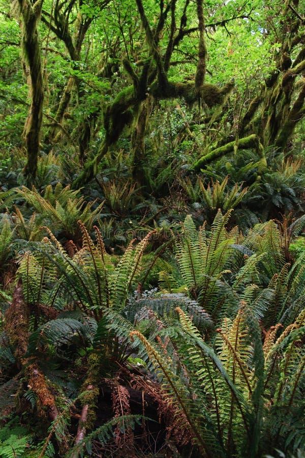 Floresta húmida densa com ferns e árvores fotos de stock