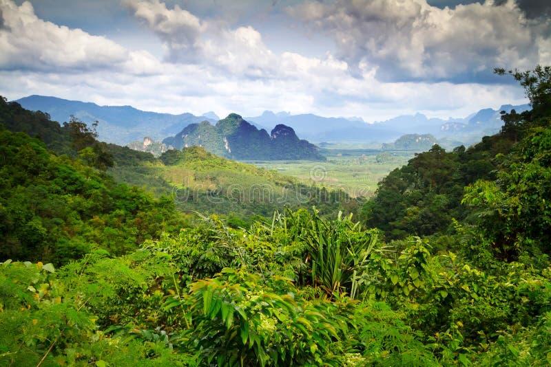 Floresta húmida do parque nacional de Khao Sok foto de stock