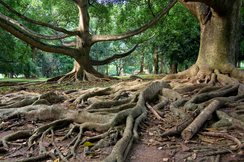 Floresta húmida primitiva imagem de stock
