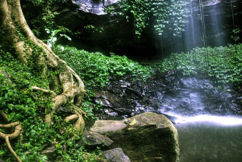 Floresta húmida saudável em Dorigo imagem de stock