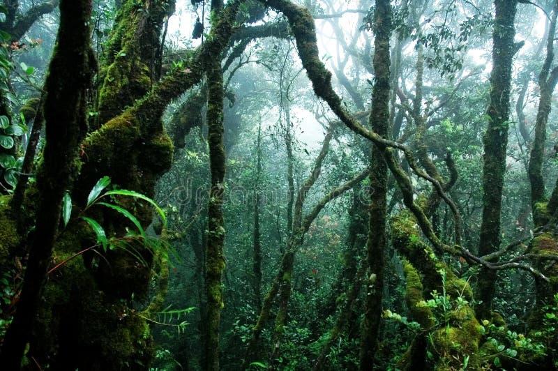 Floresta húmida tropical foto de stock royalty free