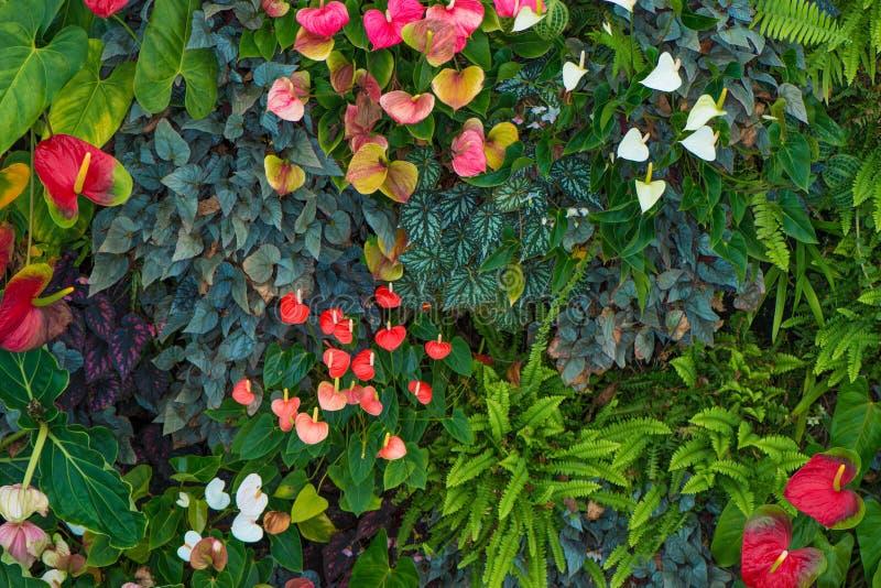 Floresta húmida tropical foto de stock