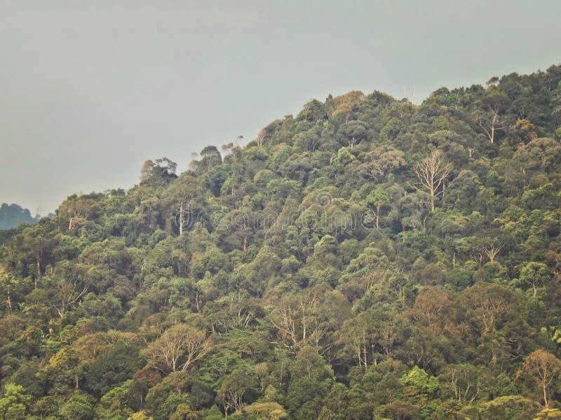 Floresta húmida tropical imagens de stock