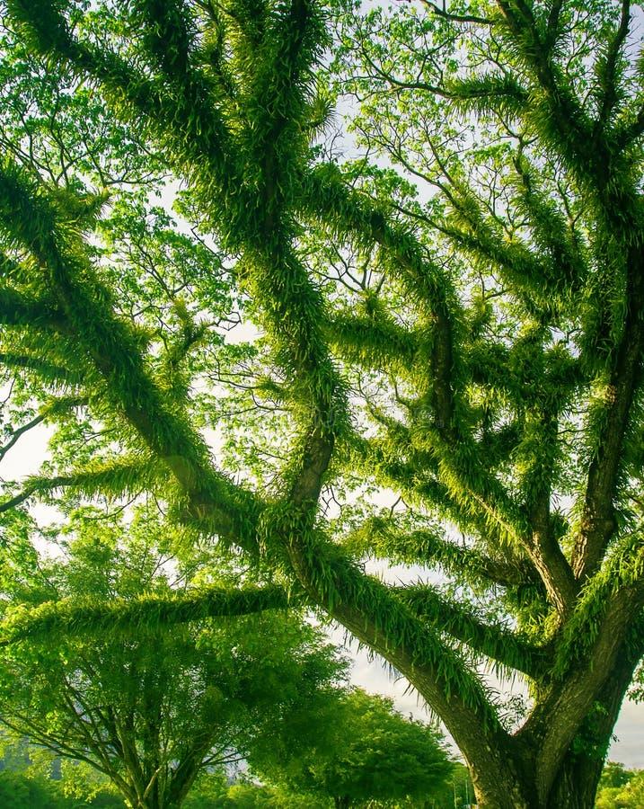Floresta húmida verde densa tropical em Austrália norte imagem de stock