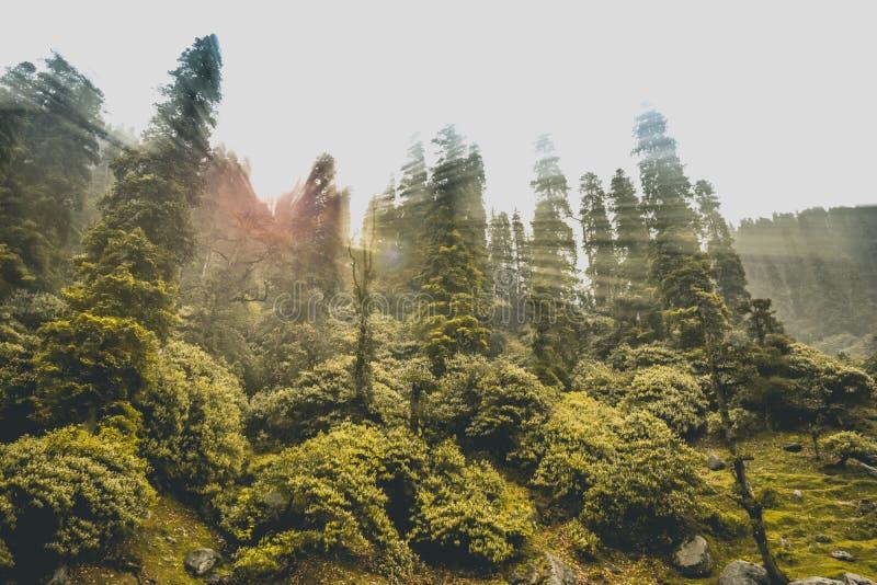 Floresta Himalaia com raios do sol imagens de stock royalty free