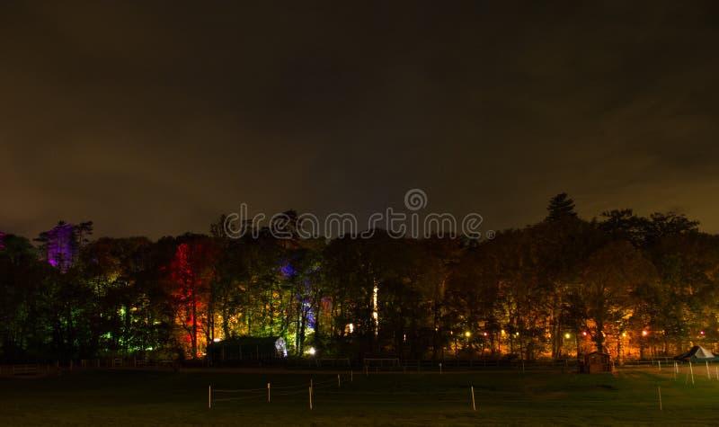 Floresta iluminada na noite imagem de stock