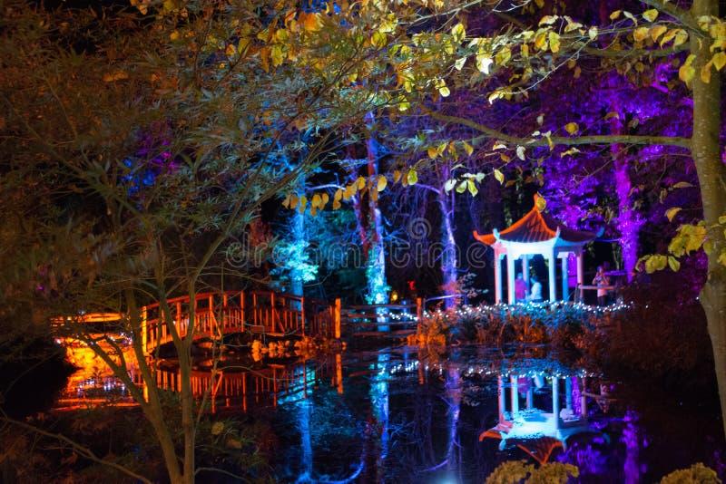 Floresta iluminada na noite fotos de stock royalty free