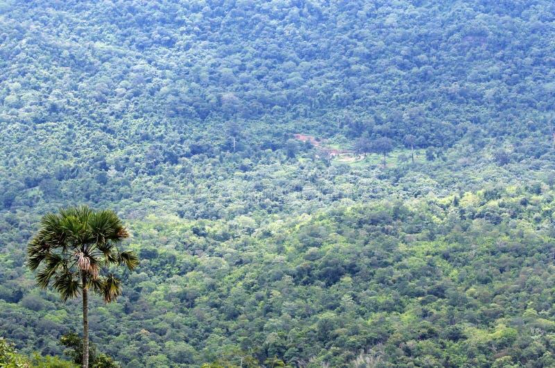 Floresta imensa imagem de stock royalty free