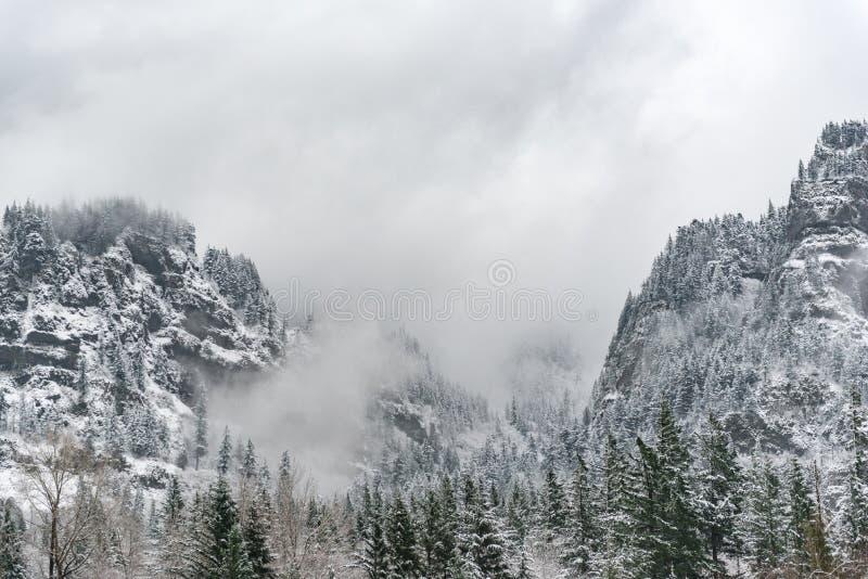 A floresta impressionante está na rocha nevado foto de stock royalty free