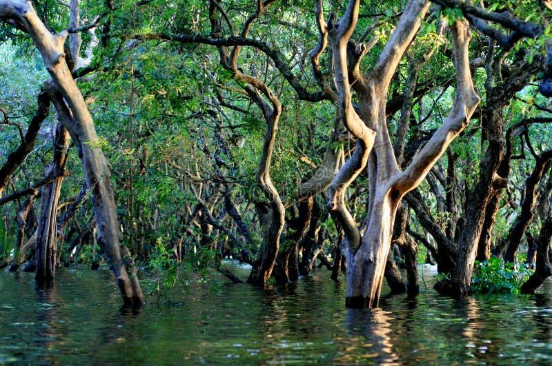 Floresta inundada foto de stock royalty free