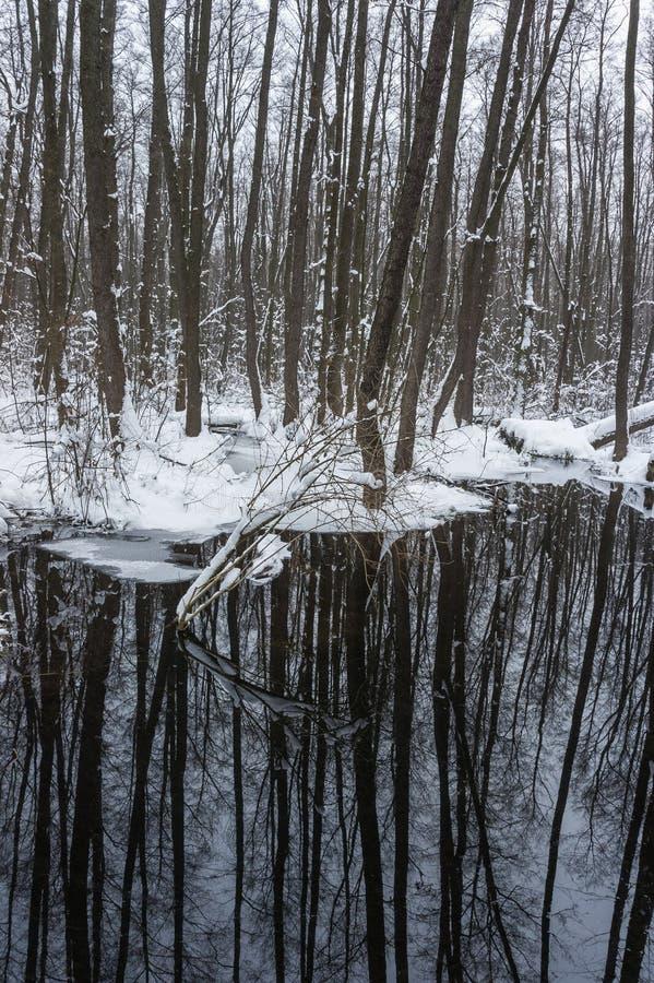 Floresta inundada bonita no tempo de inverno imagens de stock royalty free