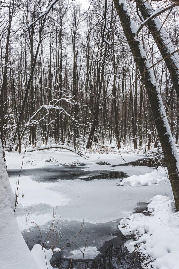 Floresta inundada bonita no tempo de inverno foto de stock royalty free