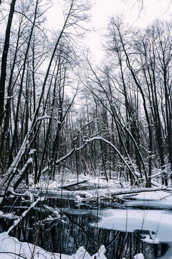 Floresta inundada bonita no tempo de inverno fotografia de stock