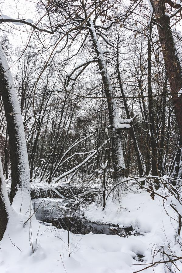 Floresta inundada bonita no tempo de inverno imagem de stock royalty free
