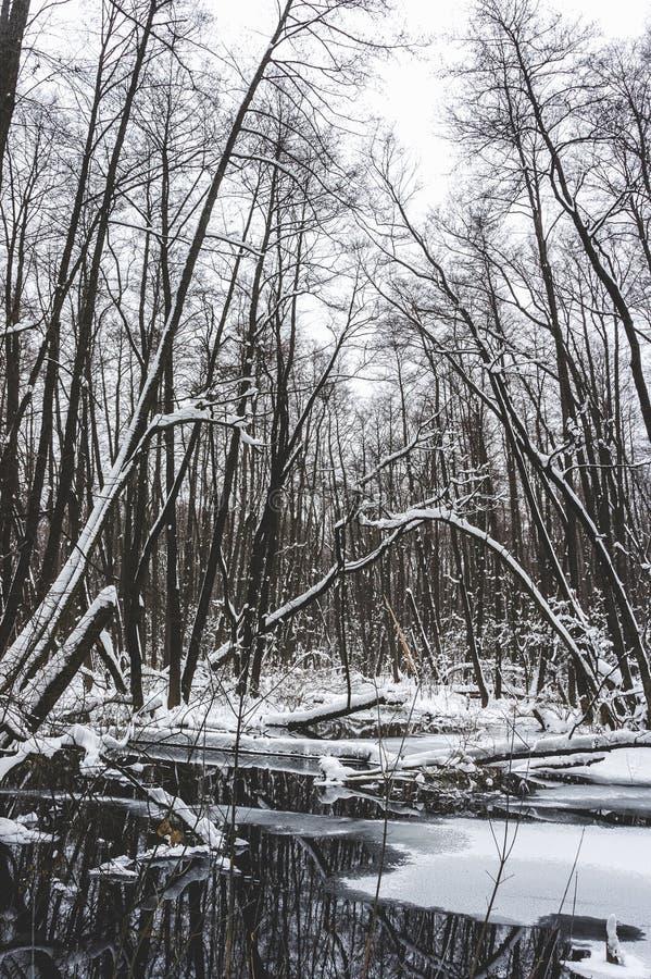 Floresta inundada bonita no tempo de inverno fotos de stock royalty free
