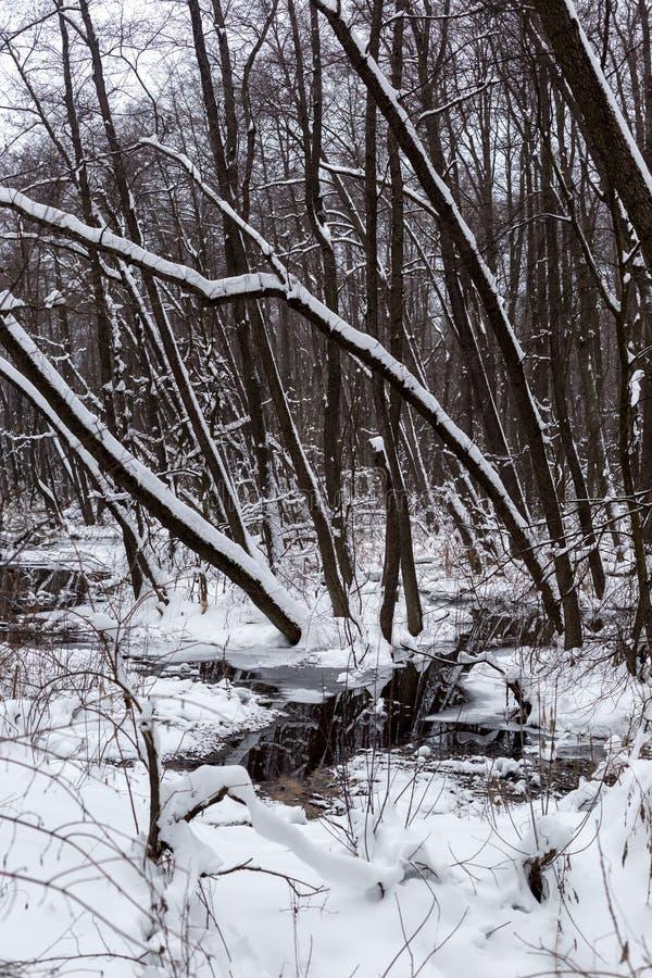 Floresta inundada bonita no tempo de inverno fotografia de stock royalty free