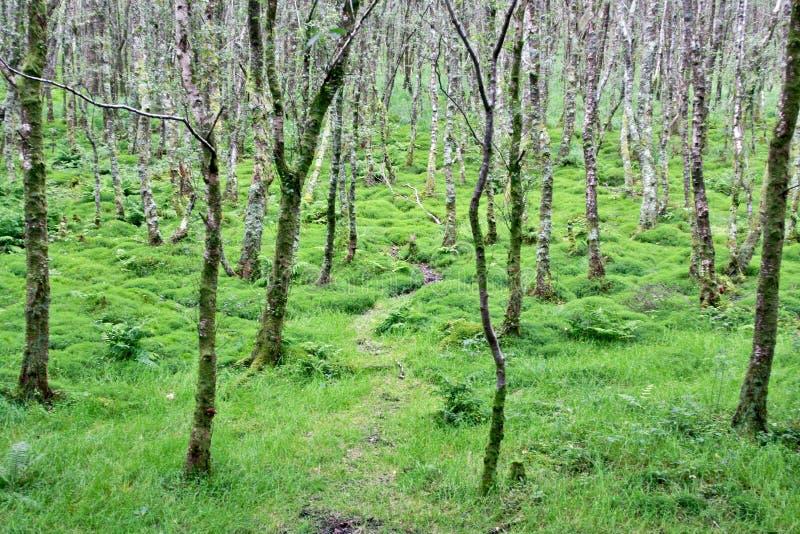 Floresta irlandesa, condado Wicklow, Irlanda imagem de stock