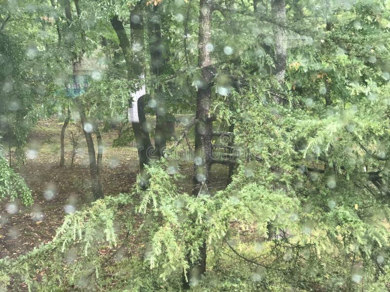 A floresta jogou um vidro chovendo foto de stock