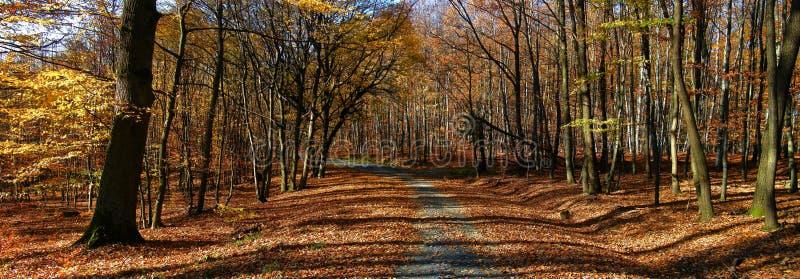 Floresta/floresta largas das árvores da folha com a estrada do cascalho na luz do dia da tarde do outono fotos de stock royalty free
