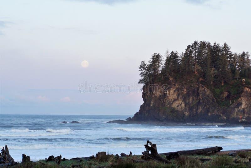 Floresta litoral do penhasco com lua imagens de stock royalty free