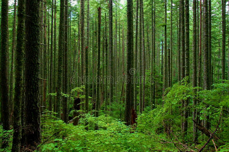 Floresta luxúria fotografia de stock royalty free