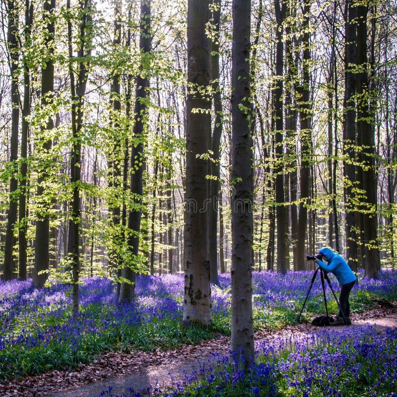Floresta mágica imagens de stock