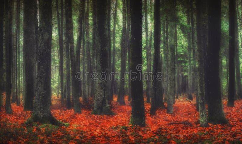 Floresta mágica imagens de stock royalty free