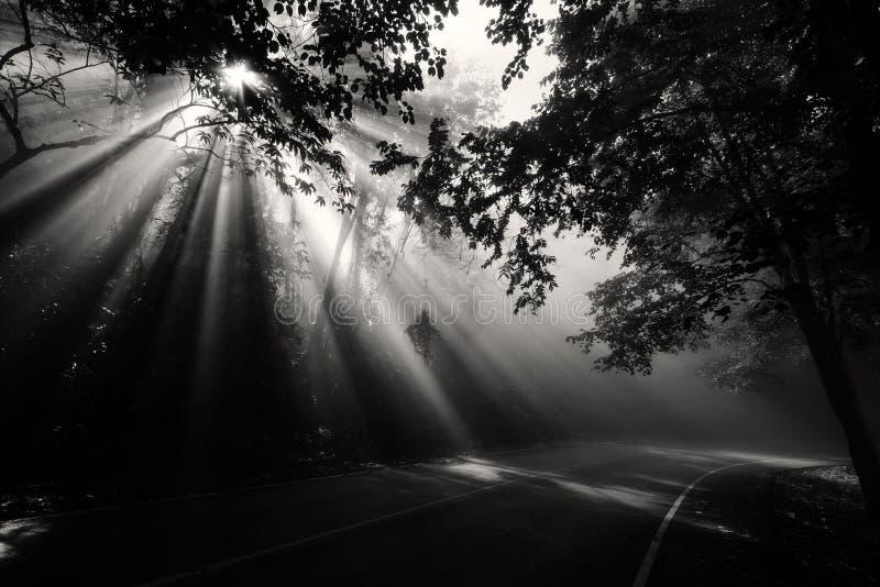Floresta mágica com raios claros foto de stock