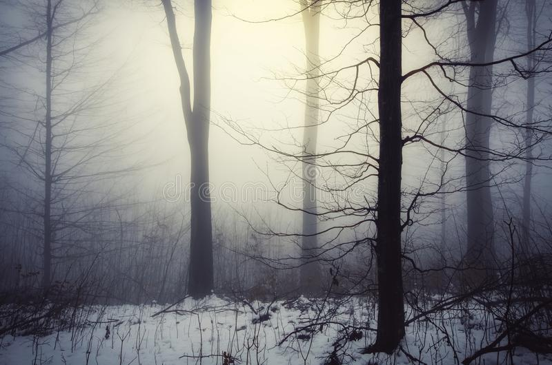 Floresta mágica do inverno com a luz que brilha através da névoa imagens de stock royalty free