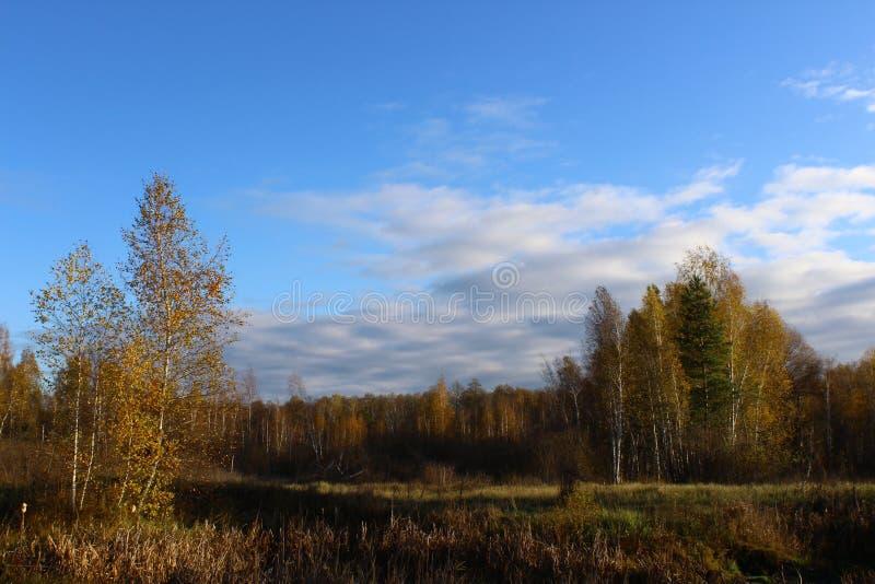 Floresta mágica do outono imagem de stock royalty free