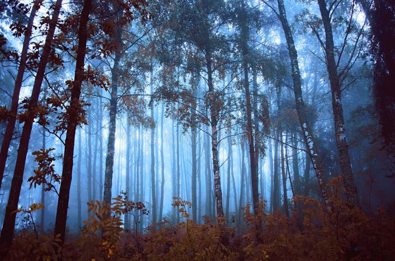 Floresta místico fotografia de stock royalty free