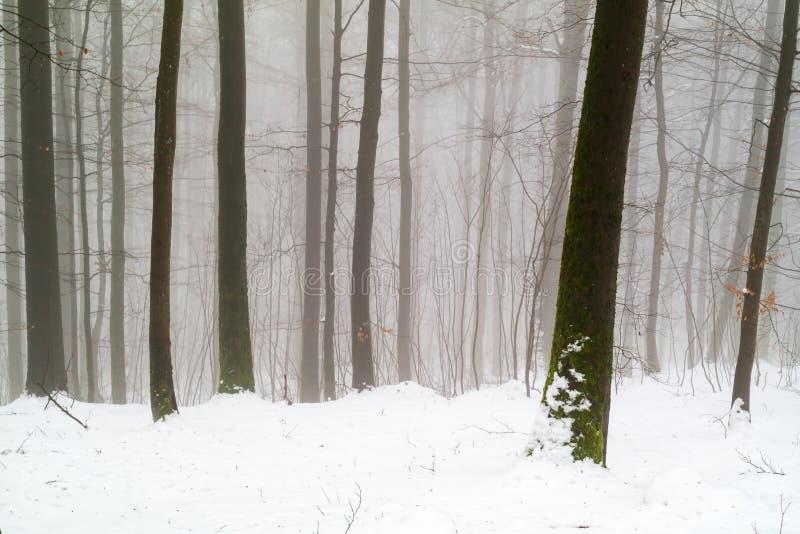 Floresta místico do inverno: nevado e nevoento imagens de stock