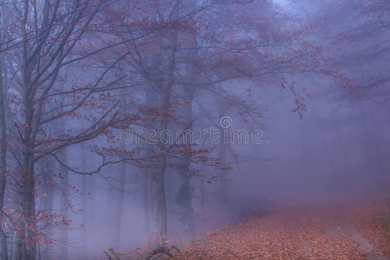 Floresta místico do outono imagens de stock royalty free