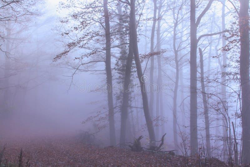 Floresta místico do outono foto de stock royalty free